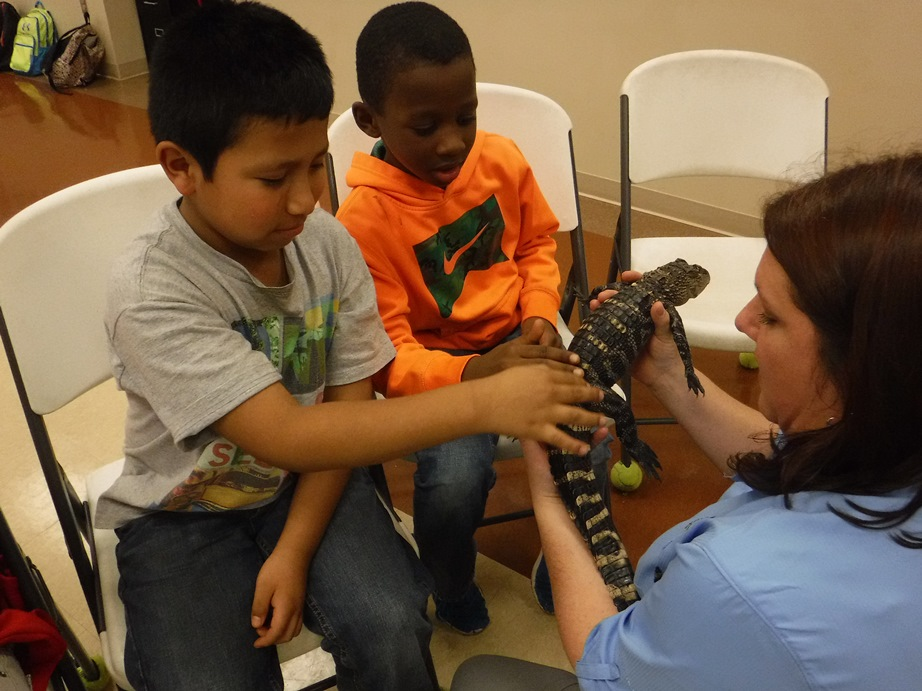 Boys petting baby alligator with Clemson 4H