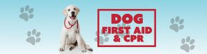 Dog First Aid & CPR @ Greenville County Rec Admin. Office | Greenville | South Carolina | United States