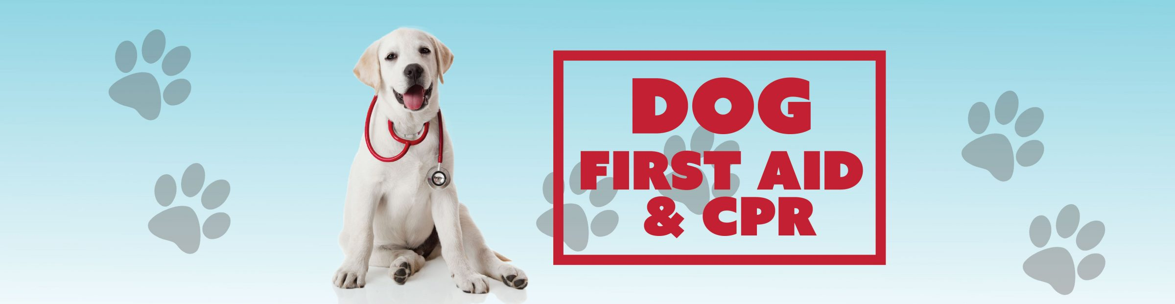 Dog First Aid Cpr Greenville County Parks Recreation Tourism