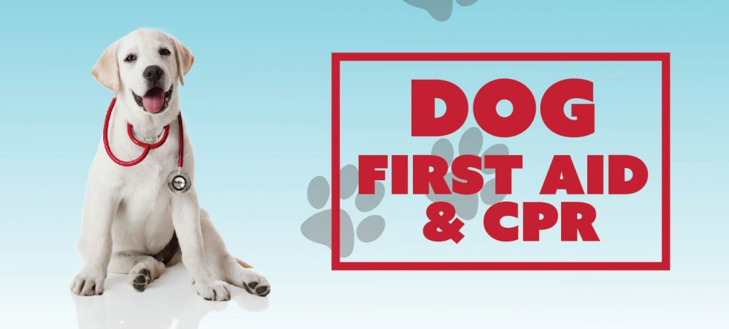Dog First Aid & CPR