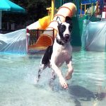 Waggin' At The Waterpark Otter Creek