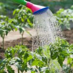 Water Conservation & Composting