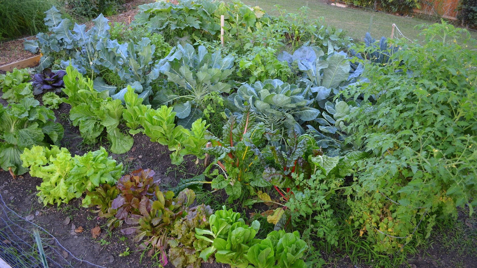 planting a fall vegetable garden - Fall Garden Plant