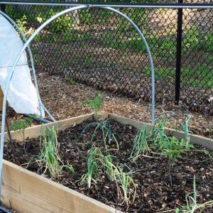 Vegetable gardening in south carolina fasci garden for North carolina vegetable gardening