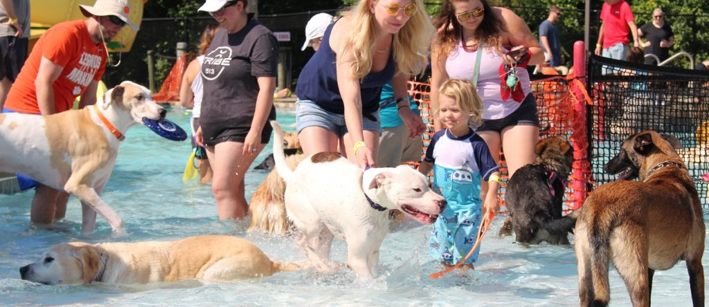 humans wading with dogs at the waterpark