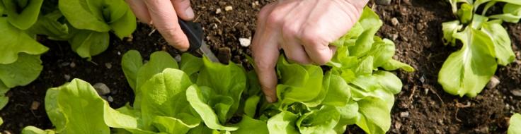 Organic Gardening Basics | Greenville County Parks